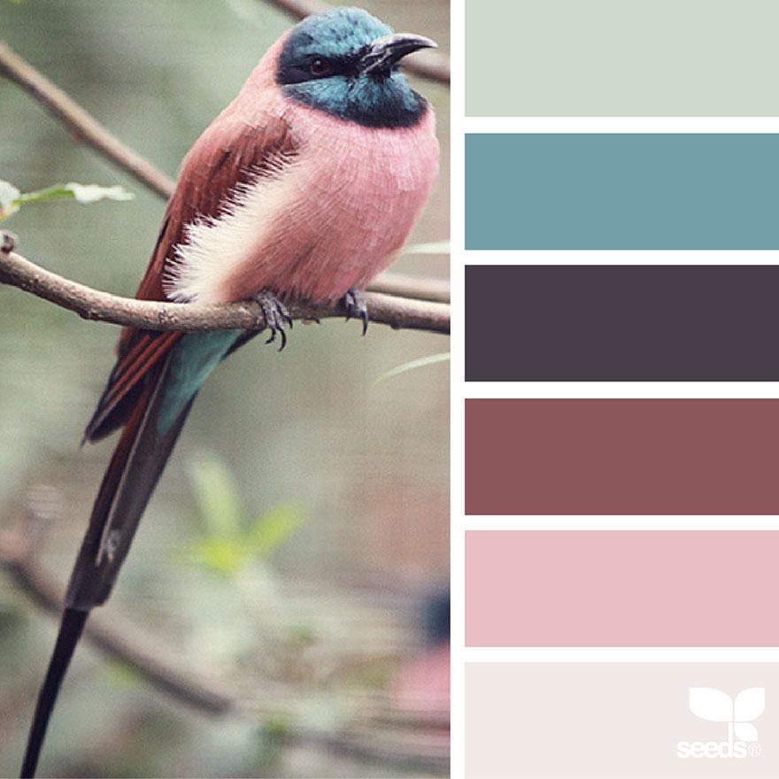 nature seeds palette colors palettes colour aesthetic colaluca jessica inspired inspiration paint perched bird decorators pallet pallette combinations boredpanda paleta