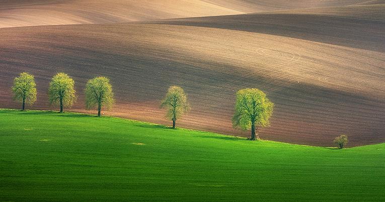 Hypnotizing Beauty Of Moravian Fields In The Czech Republic