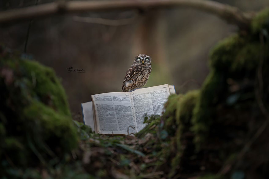 owl-and-mushrooms-tanja-brandt-9