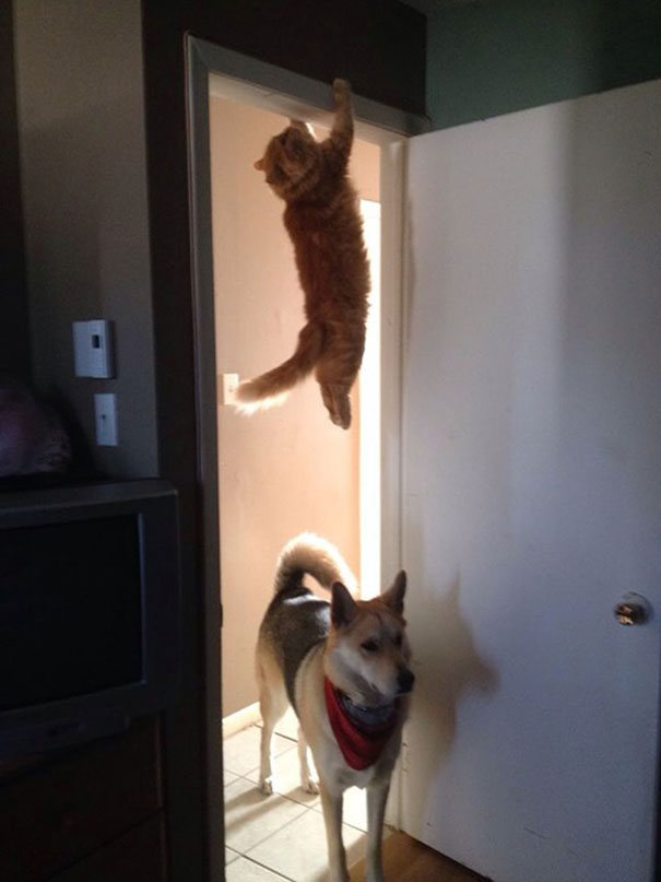 You Guys See The Cat Run Past Here?