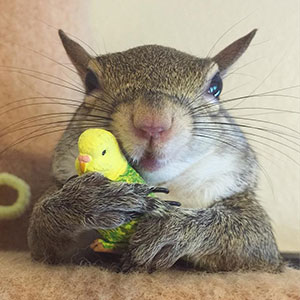 Squirrel Rescued After Hurricane Becomes Family's Cutest Member