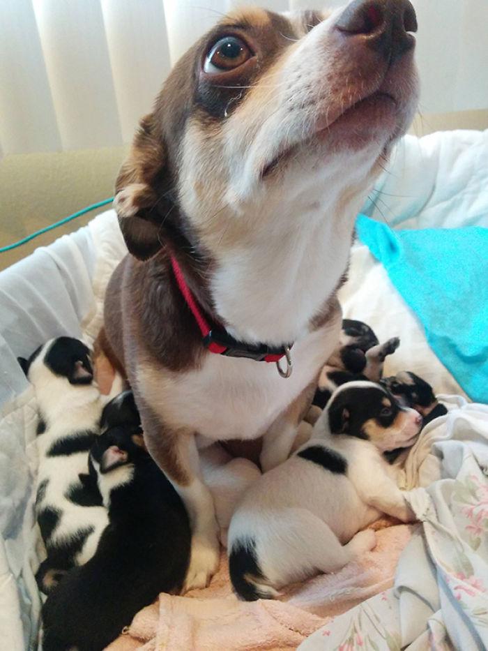Snickers Es Una Orgullosa Mamá De 6 Adorables Cachorros
