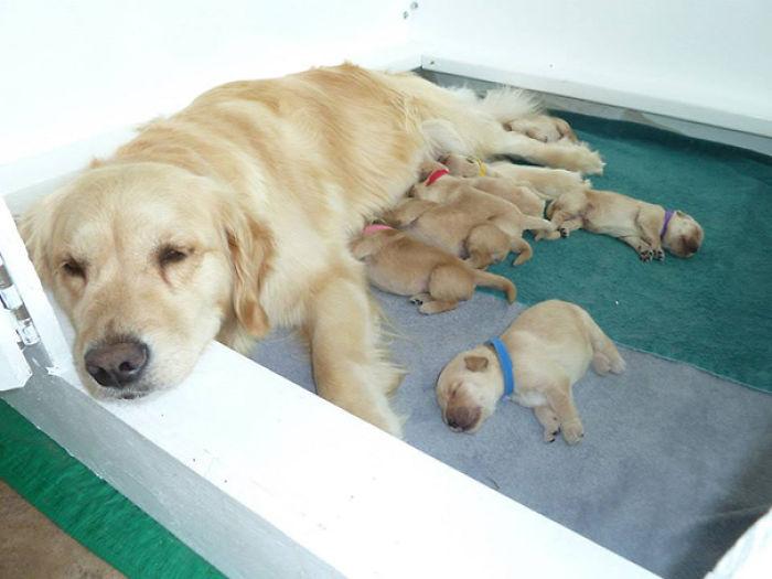 La Mamá Orgullosa De Mi Amigo Y Sus Nuevos Cachorros