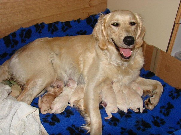 Lily And Her 12 Pups