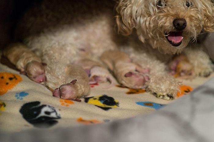 Una Nueva Mamá Trae En Año Nuevo A Sus Cinco Cachorros Durmientes