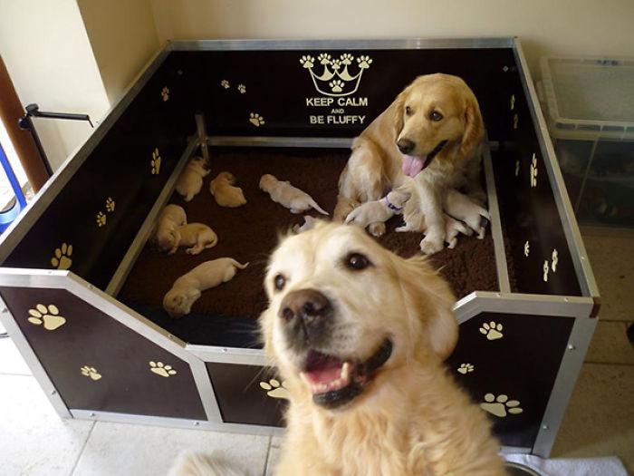 Estaba Tomando Una Foto De Una Camada De Cachorros De Una Semana Cuando Mi Otro Perro Se Cólo En La Toma