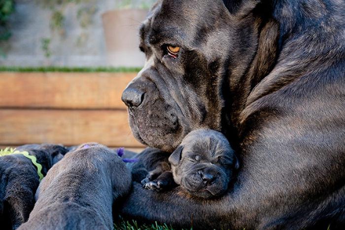Nasa Y Sus Cachorros