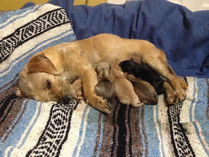 Mi Perro Adoptado Y Sus Cachorros
