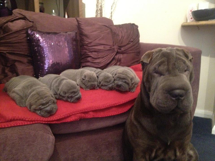 50 Proud Dog Mommies With Their Puppies