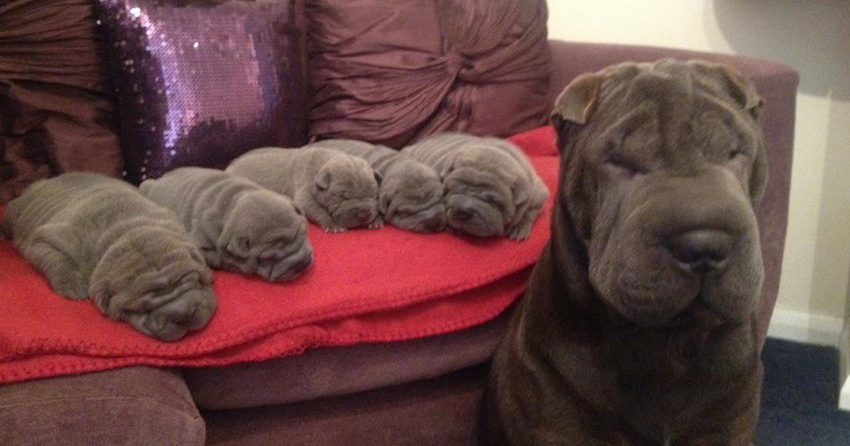 15+ Proud Dog Mommies With Their Puppies