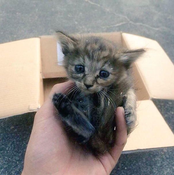 rescue-kitten-komari-ferret-brothers-51