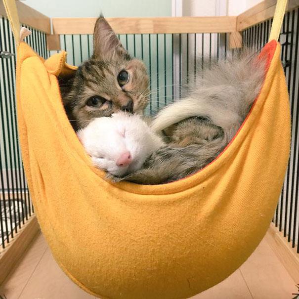 rescue-kitten-komari-ferret-brothers-62
