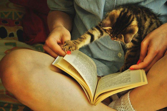 """""""let Me Read Please, I Didn't Finish That Pharagraph Yet!"""""""