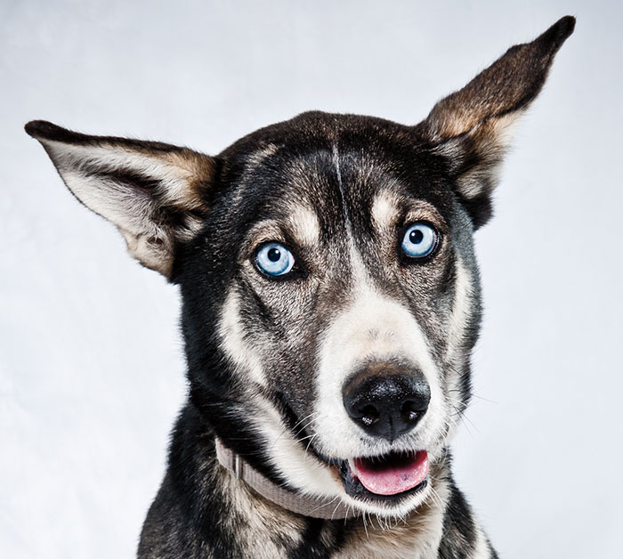 Born To Run: I Photograph The Beauty Of Sled Dogs