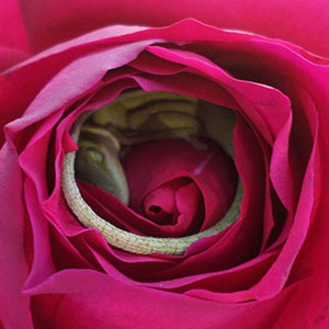 This Lizard Made A Bed Out Of A Rose And It's The Cutest Thing Ever