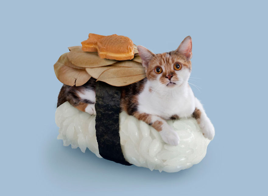 Cats dressed in comical costumes are actually sushi rolls for Can cats eat raw fish