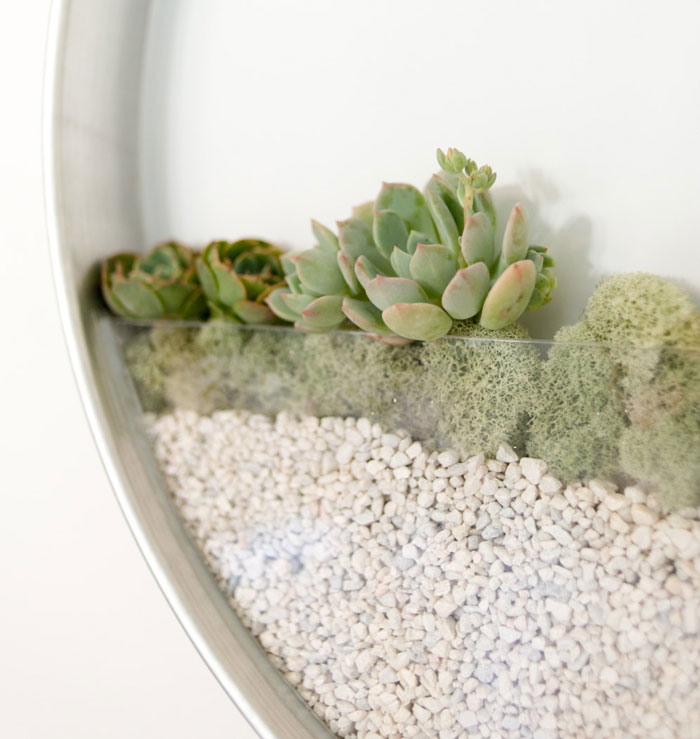 vertical-garden-air-plants-kim-fisher-2