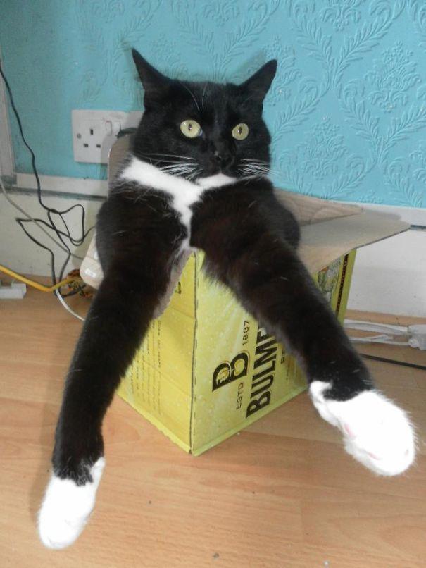 Cat Freshers Week.