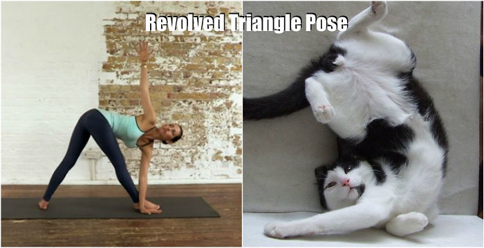 18-pozitii-yoga-inspirate-de-animale-15