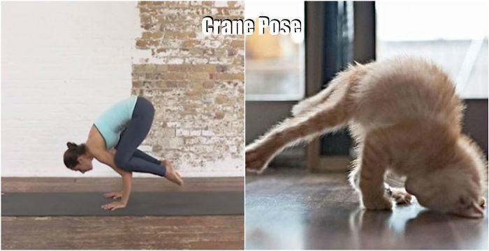 18 Cute Animals Showing You Some Yoga Poses