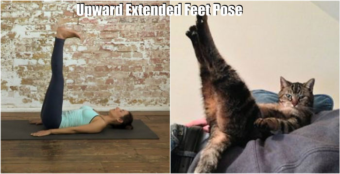 18 Cute Animals Showing You Some Yoga Poses Bored Panda