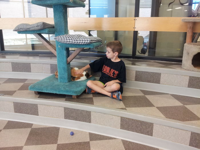 My 7-year-old Is An Animal Shelter Volunteer. He's Singing The Cat A Lullaby To Help It Nap.
