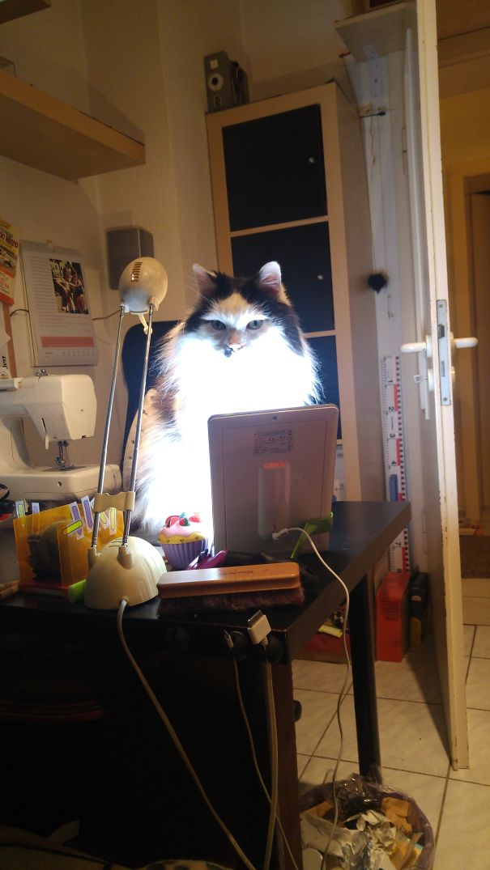 ..my Cat Stuck On My Lightpad