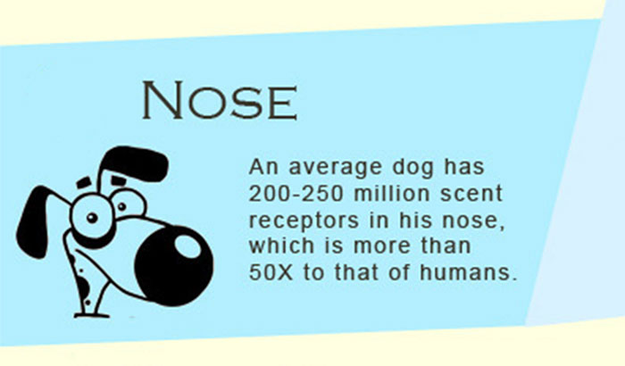 30 Facts About Dogs You Have Probably Never Heard Before