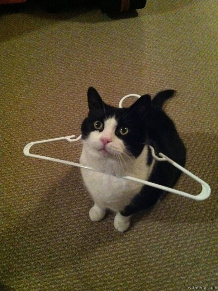 Human I Request Your Assistance