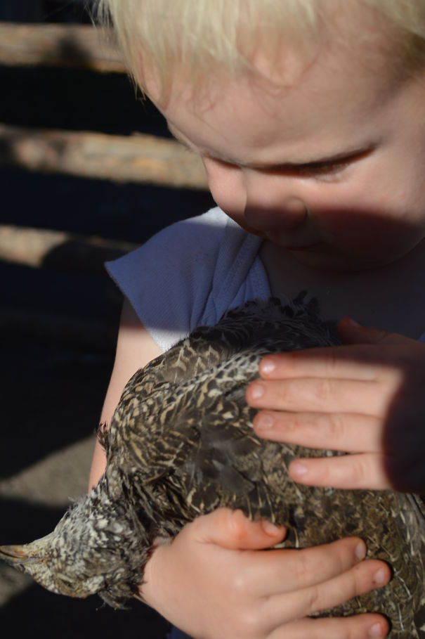 Our Little Boy Caressing A Grouse That Had Been Killed. He Had Also Tryied To Give It Water