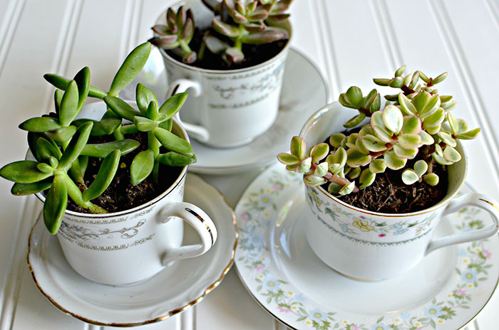 Succulent Tea Cups