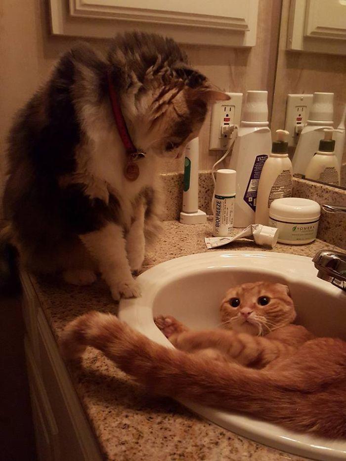 Wwe Sink Catmania