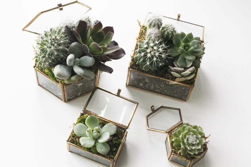 Succulents In Little Jewelry Box