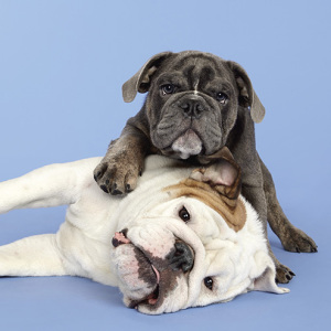 What's Cuter Than Photographs Of Just One Dog? Photographs Of Two Dogs!