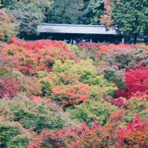 An Autumn Tale In Kyoto, Japan