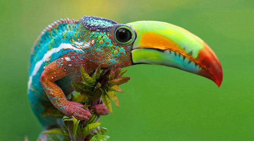Toucameleon