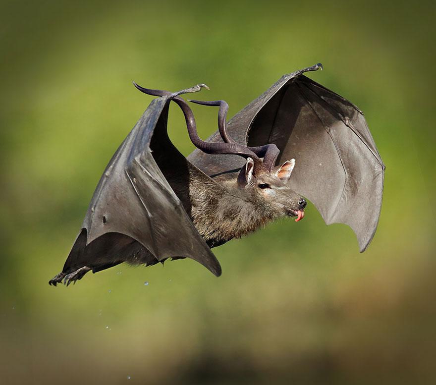 Flying Foxkudu