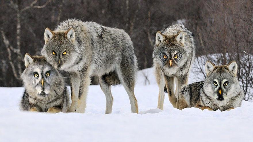 Owlves