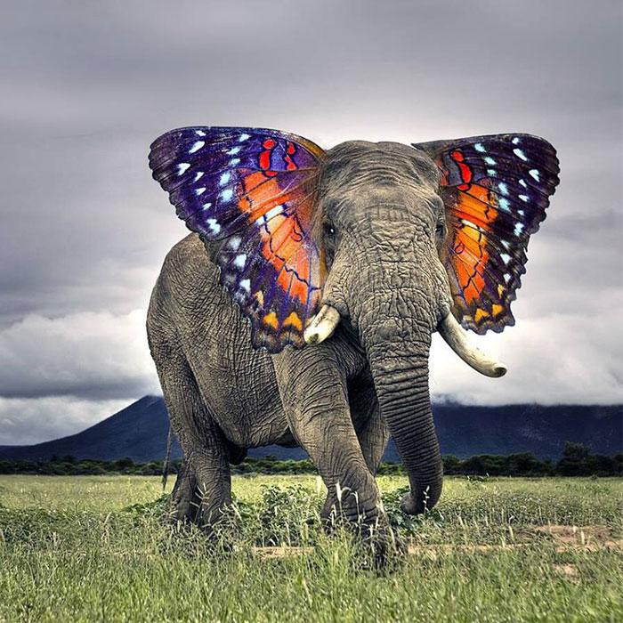 15+ Strange Animal Hybrids Bred In Photoshop