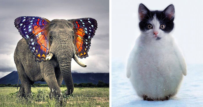 15+ Strange Animal Hybrids Bred In Photoshop | Bored Panda