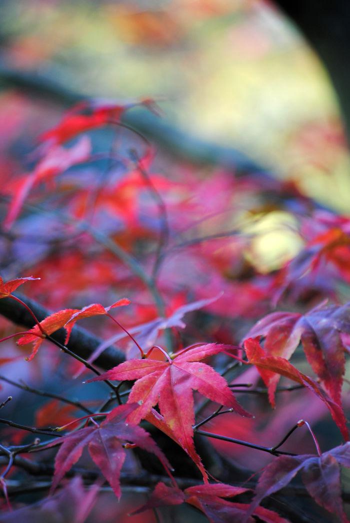 Autumn – The Dead Summers Soul