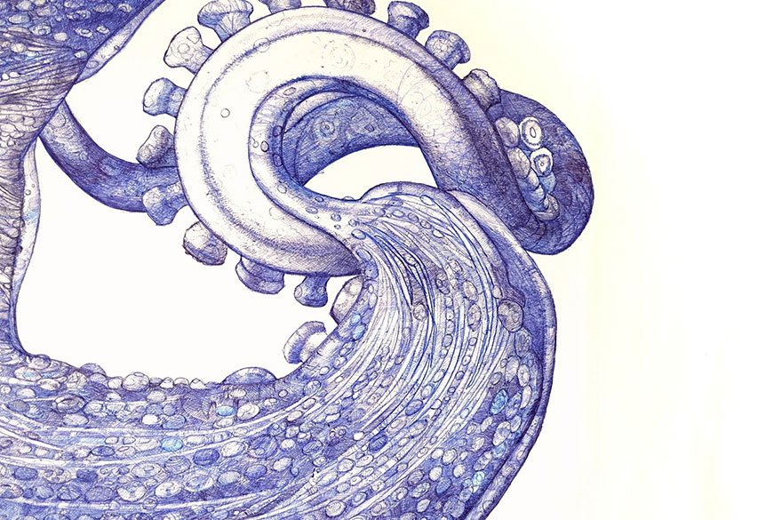 ballpoint-pen-drawing-octopus-raymond-cicin--3