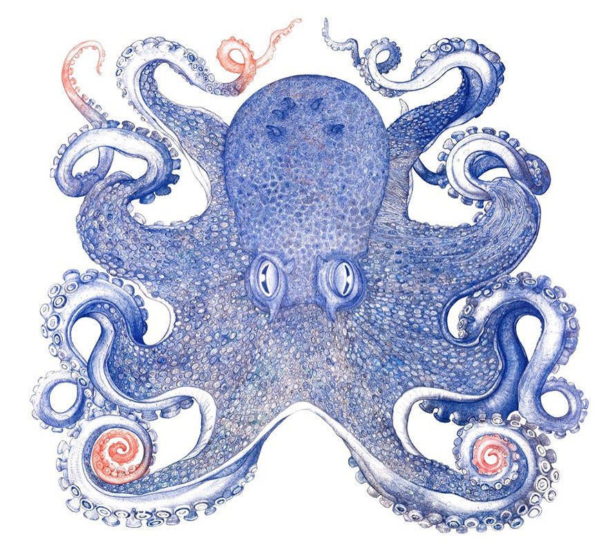 ballpoint-pen-drawing-octopus-raymond-cicin--6