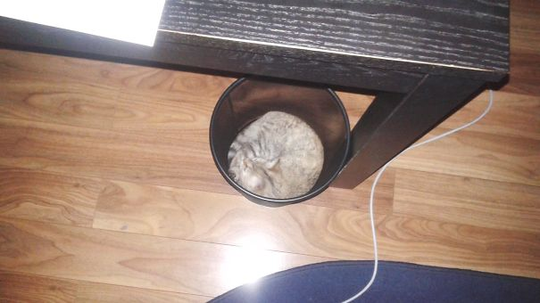 Best Place For A Nap Is The Garbage Bag :))