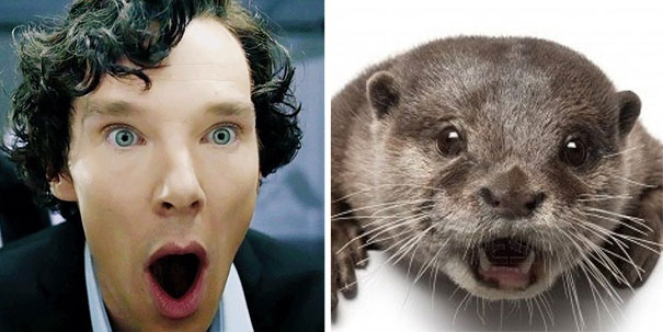 Benedict Cumberbatch Looks Like An Otter