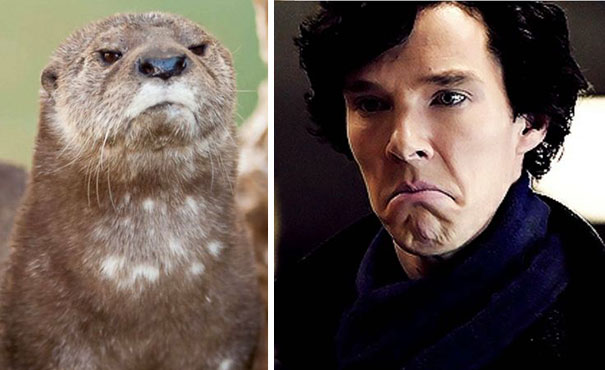 Benedict Cumberbatch Looks Like An Otter