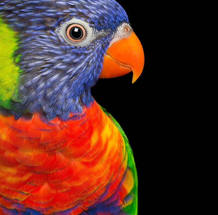 Rescued Birds Show Their Quirky And Colorful Beauty In Alex Cearns' Photos