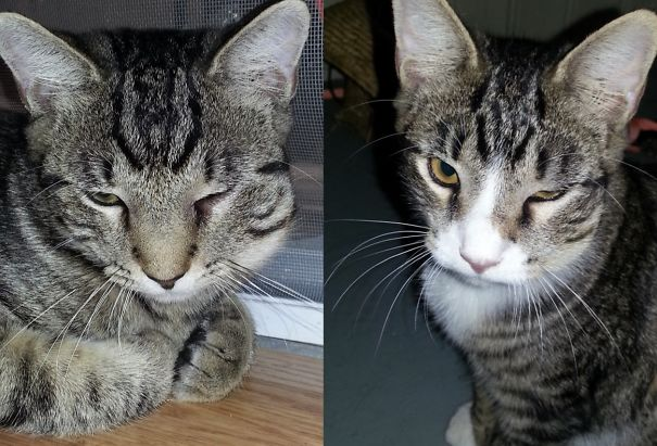 Both My Kitties Got Stung In The Same Place On The Same Day.