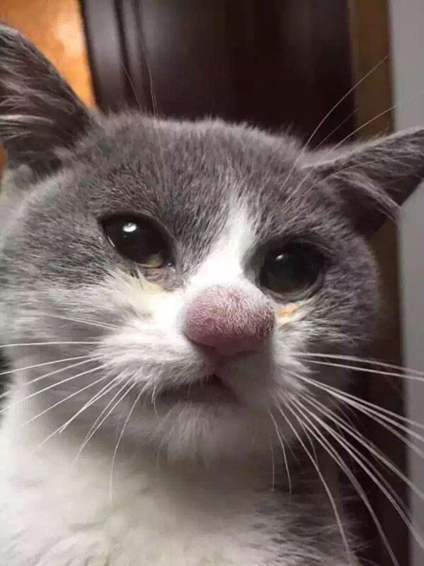10+ Cats Who Got Stung By Bees And Wasps | Bored Panda Cat Home Designs Inside Html on photoshop cat, dom cat, e-mail cat, sharepoint cat, fireworks cat, spastic cat, oracle cat, python cat, cgi cat, curl cat, twitter cat, iphone cat, web cat, marketing cat, linux cat,