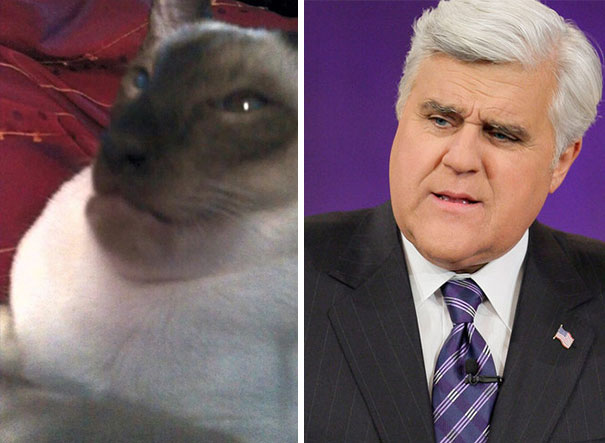 Cat Ate A Wasp... Now It Looks Like Jay Leno